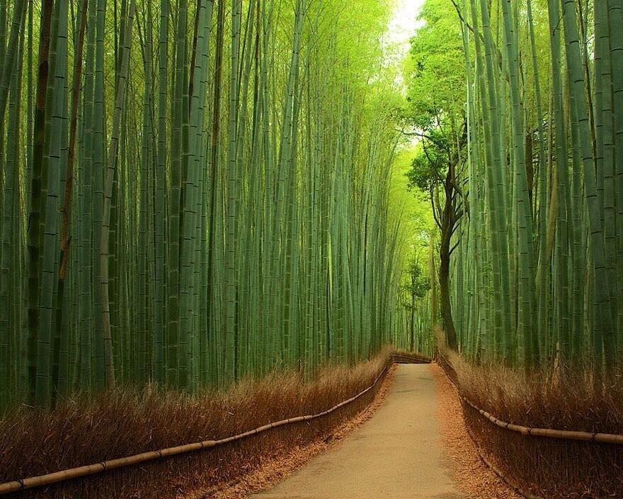 La Lezione del Bambù